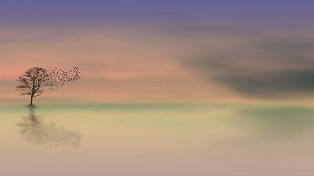 生命の樹 セフィロトの樹 treeoflife treeofsmile 生命の樹カウンセリング 色 カラー 12色